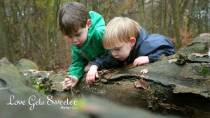 two toddler brothers looking for acorns in the woods with their Mum filmed for a family video shoot in tarleton